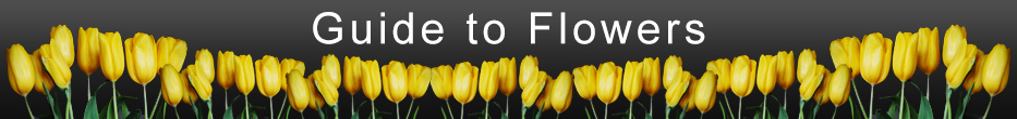 Guide to Flower Care