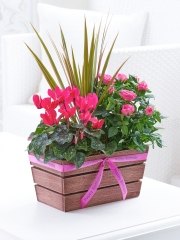 Happy Birthday Rosy Pink Autumn Planter with Belgian Chocolates