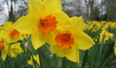 Flowers Elgin - The best spring flowers to choose for special occasions such as