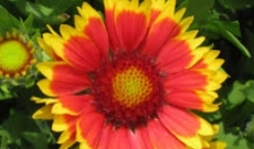 Tips When Selecting Florists for You to Buy Flowers Elgin